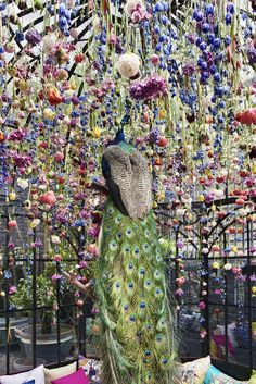 Peacock under the floral canopy in the birdcage at the peaceful, bohemian…