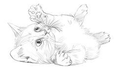 рисунки котят для срисовки легкие: 24 тыс изображений найдено в Яндекс.Картинках