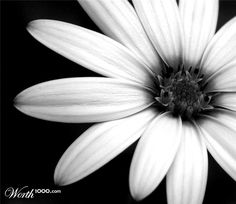black and white flowers - Google Search