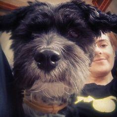 Cathy #mydog#mylife##mylove# #Cute #pupy#