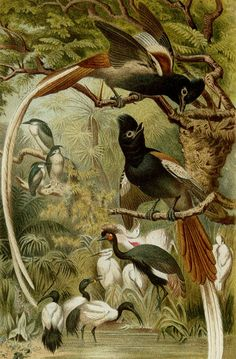 1890 Antique fine lithograph of BIRDS OF by AntiquePrintsOnly, $19.50