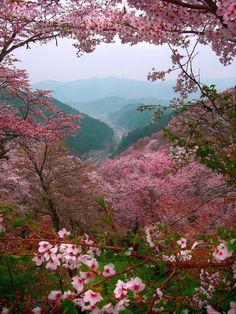 Sakura, Japan - via Paisajes Hermosos's photo on Google+