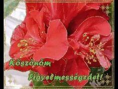 Köszönöm...Barátaimnak szeretettel. Singing, My Love, Flowers, Youtube, Cook, Recipes, Recipies, Ripped Recipes, Royal Icing Flowers