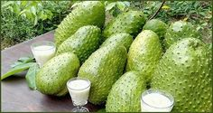 Unfortunately, the miraculous properties of this fruit have been kept a secret by the pharmaceutical companies, as they can reduce their profits, and they would no longer sell their products and medicines. This fruit is known as Guanabana or soursop and is a low-growing tree. Its fruits are sweet and large, and can be consumed …
