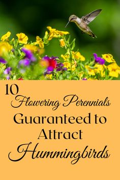 Humingbirds love a certain kind of flower. If you have these particular flowers in your garden, You're almost guaranteed to attract hummingbirds! Flowers That Attract Hummingbirds, Hummingbird Garden, Perennials, Attraction, Herbs, Amazing, Herb, Spice