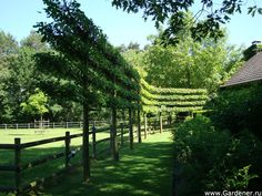 Шпалерные деревья - Дизайн интерьеров   Идеи вашего дома   Lodgers