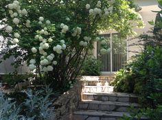 Villy's garden