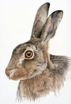 hare drawing - Google Search                                                                                                                                                                                 More