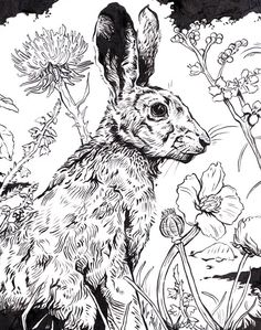 original ink drawing hare - Coloring Pages For Paint Program