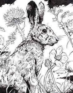 Original Ink Drawing Hare via Etsy. Art And Illustration, Illustrations Posters, Animal Sketches, Animal Drawings, Art Drawings, Decoupage Art, Rabbit Art, Easter Art, Bunny Art