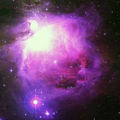 Orion Nebula hubble telescope pictures of orion Hubble Photos, Telescope Pictures, Orion's Belt, Astronomy Facts, Orion Nebula, Constellation Tattoos, Space Photos, Deep Space, Constellations