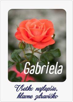 Rose, Flowers, Plants, Blog, Funny, Pink, Blogging, Funny Parenting, Plant