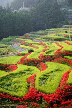 江里山棚田に彼岸花が咲いている写真