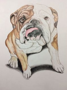 buy english bulldog pet dog art original drawing 6 x 9 carla smale pencil drawing by carla smale on artfinder discover thousands of other origin