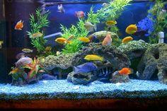 Als Deko in diesem Aquarium dienen Korallen-Imitationen