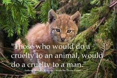 """Those who would do a cruelty to an animal, would do a cruelty to a man."" ~ A.D. Williams"