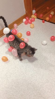 "gifsboom: "" Static balloon cat. [video] "" cutie"