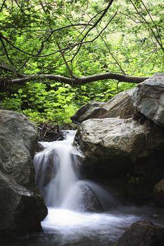A brook alongside the trail down Kirk Creek, Big Sur. So pretty.