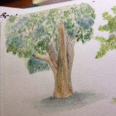 A ltima rvore dos estudos Mangueira The last tree of my studies Mango tree dwgdaily watercolor