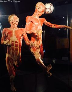 Gunther Von Hagens, Real Bodies, Inventions, People, Game Of Thrones Characters, Fictional Characters, Blog, Blogging, Fantasy Characters