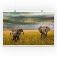 Elephants Grazing Photography A-91666 (4 Sizes Art Prints, Giclees, Posters, Wood & Metal Signs, Tot Vintage Artwork, Vintage Posters, Free Canvas, Stock Art, Modern Photography, Mermaid Art, Antique Maps, Metal Signs, Elephants