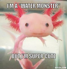 axolotl out of water - Google Search