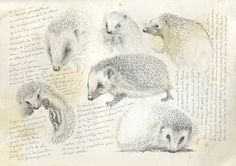 >oo MARCELLO PETTINEO oo< Illustration Botanique, Illustration Sketches, Botanical Illustration, Art Sketches, Animal Sketches, Animal Drawings, Art Drawings, Sketchbook Inspiration, Art Sketchbook
