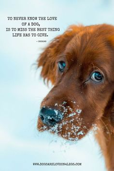 To never know the love of a dog, is to miss the best thing life has to give. Dog, Quotes