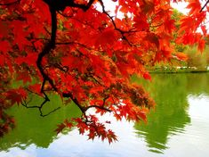 Google Image Result for http://www.freepicturesfreepictures.com/free-pictures-fall-autumn-colors-leaves-Mexicanwave.jpg