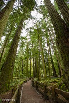 Discover big trees on a Vancouver Island Road Trip from Nanaimo to Tofino. If you're traveling to British Columbia, don't miss it. Vancouver Island, Canada Vancouver, Sunshine Coast, Places To Travel, Places To See, Travel Destinations, Canadian Travel, Western Canada, Victoria