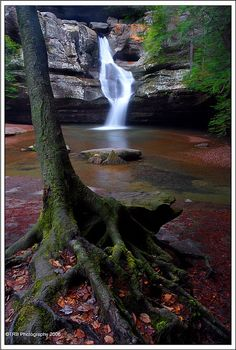 ✯ Roots and the Fall - Ohio.  (I'm pretty sure this is Cedar Falls in Hocking Hills State Park... Beautiful place)