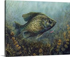 Canvas Wall Art, Wall Art Prints, Framed Prints, Canvas Prints, Big Canvas, Wildlife Paintings, Wildlife Art, Fish Paintings, Fish Artwork