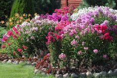 10 smukke blomster og planter, der vil blomstre mange år i træk i haven, uden du behøver at passe dem.