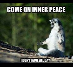 15 Lemur Memes That Will Make Your Wednesday So much Better - Sarcasm Meme - Sarcasm Meme ideas - 15 Lemur Memes That Will Make Your Wednesday So much Better The post 15 Lemur Memes That Will Make Your Wednesday So much Better appeared first on Gag Dad. Funny Positive Quotes, Stupid Quotes, Short Funny Quotes, Sarcasm Quotes, Funny Inspirational Quotes, Funny Quotes About Life, Funny Sarcasm, Funny Life, Stupid Memes