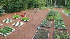 Mavis Butterfield | Backyard Garden Plot Pictures – Week 26 of 52