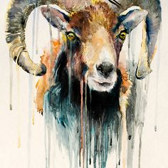 Ram watercolor painting print x goat, animal, illustration, animal… Watercolor Animals, Watercolour Painting, Painting Prints, Painting & Drawing, Art Prints, Elephant Watercolor, Cabras Animal, Art Et Illustration, Illustration Animals