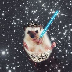 21 Reasons You Should Follow Lionel The Hedgehog On Instagram