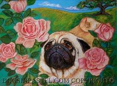 """Pug & Roses by Mary Detwiler Oil Pastel ~ 9"""" x 12"""""""