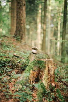 Wald, Waldbaden, Natur, Kunst, Inspiration, Ritual, Herbst, Frühling, Sein, Genuss, Workshop, Stein, Moos, LIicht