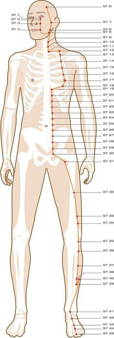 Stomach Acupuncture Points                                                                                                                                                                                 More #AcupunctureMeridians
