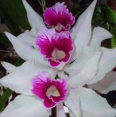 Fotos de orquídeas                                                                                                                                                                                 Más