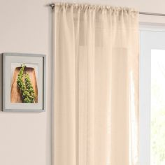 Casablanca Cream Voile Panel Curtain