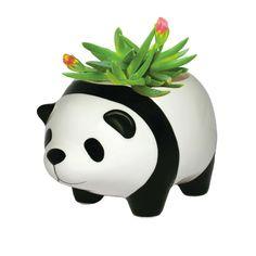 Panda Plant Pot