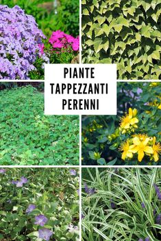 Outdoor Plants, Garden Plants, Outdoor Gardens, Begonia, Chlorophytum, Outdoor Education, Garden Gazebo, Green Life, My Secret Garden