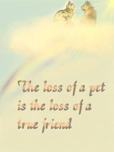 You may want to get a granite pet memorial for your #dog after it passes on.
