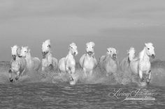 Camargue Horses Running II - https://www.etsy.com/listing/90869261/camargue-horses-running-ii-fine-art?ref=shop_home_active