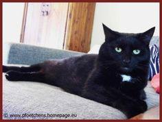Dani wuchs auf dem Land mit Katzen, Hunden und Hasen auf. Im Juni 2013 erfüllte sie sich ihren Traum mit Tieren zu arbeiten und eröffnete ihre mobile Haustierbetreuung, die nun auch über Schnuff & Co gebucht werden kann.  http://www.schnuff-und-co.de/mobile-tierbetreuung-in-thuringen.html  Mach ebenfalls dein Hobby zum Beruf und bessere als Tiersitter deine Haushaltskasse auf!   http://www.schnuff-und-co.de/customer/account/create/