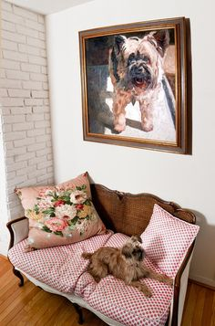 This little Brussels Griffon gets to make himself at home on a love seat under his portrait when he's not hangi...