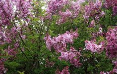 So pretty. Trees image | Flowers Plants Trees Gardening photos