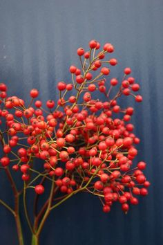 Rose hips -- do you like these or are they too much like berries/fruit for your taste?